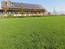 shibafuのブログ-芝生のお庭の病院