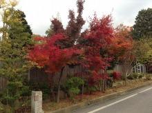 shibafuのブログ-社長宅